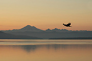 Orcas Island - Bald eagle over Puget Sound and Mt. Baker [orel]
