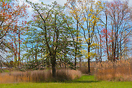 Trees with leaves turning colors growing amongst tall grasses with a blue sky background