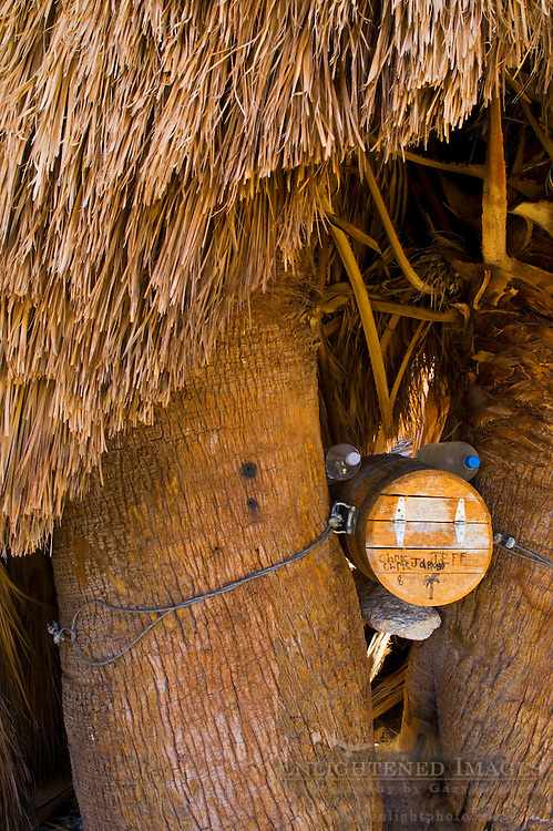 Visitor log container and spare water in palm tree, 17 Palms Oasis, Anza Borrego Desert State Park, San Diego County, California