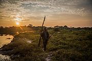 """Un ranger cherche des traces d'éléphants de forêt au bai de Sukisa. Les """"bais"""" sont des clairières marécageuses dans lesquelles les éléphants se baignent à la tombée de la nuit. Il reste environ 2 000 éléphants à Salonga, contre 150 000 il y a 30 ans."""