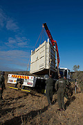 July 18, 2012: Rhino capture and relocate  in Kruger National Park in South Africa