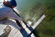 Peter Perina, owner of Eastfield Farm, drops a bucket of oysters he is raising back into the water. Peter teaches and promotes oyster aquaculture around Virginia as a sustainable food source