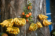 Bananas and oranges displayed on a tree, Tianguis street market, Ajijic, Jaliso, Mexico.