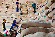 08 MAY 2010 - PATHUM THANI, THAILAND: Workers scramble of a mountain of bagged rice in the J&D Rice Group Ltd warehouse in Pathum Thani, about 30 miles north of Bangkok, Thailand. According to the UN Food and Agricultural Organization (FAO),Thailand's rice harvest is expected to be reduced by about 16% this year because of a persistent drought across the country but most pronounced in the northeast region of Thailand. A spokesperson for J&D said they get rice from across Thailand and so far there haven't been any shortages. J&D exports all of their rice China.  PHOTO BY JACK KURTZ