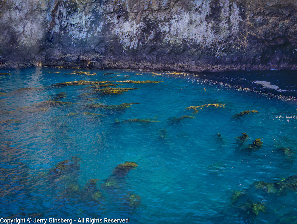 North America, United States, USA, Anacapa Island, Channel Islands National Park off the the coast of central CA.