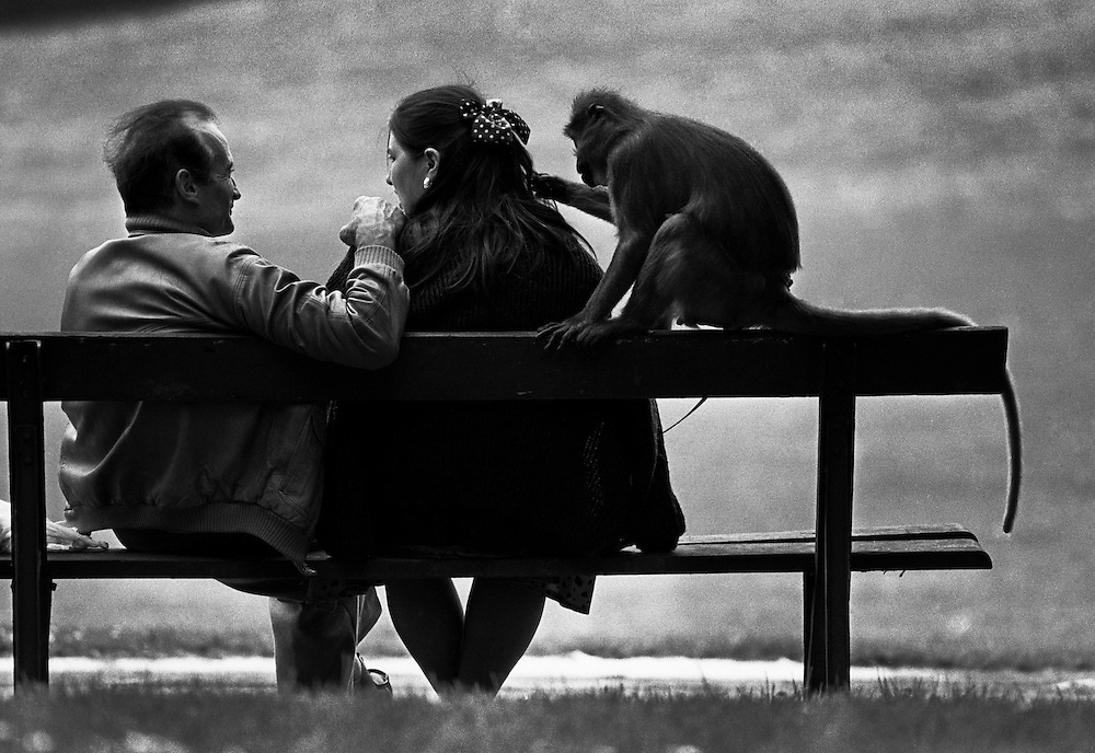 Erika has her hair groomed by her pet monkey, named Cuore Bello, while sitting on park a bench with her husband Marino in Brussels, Belgium. (1988)