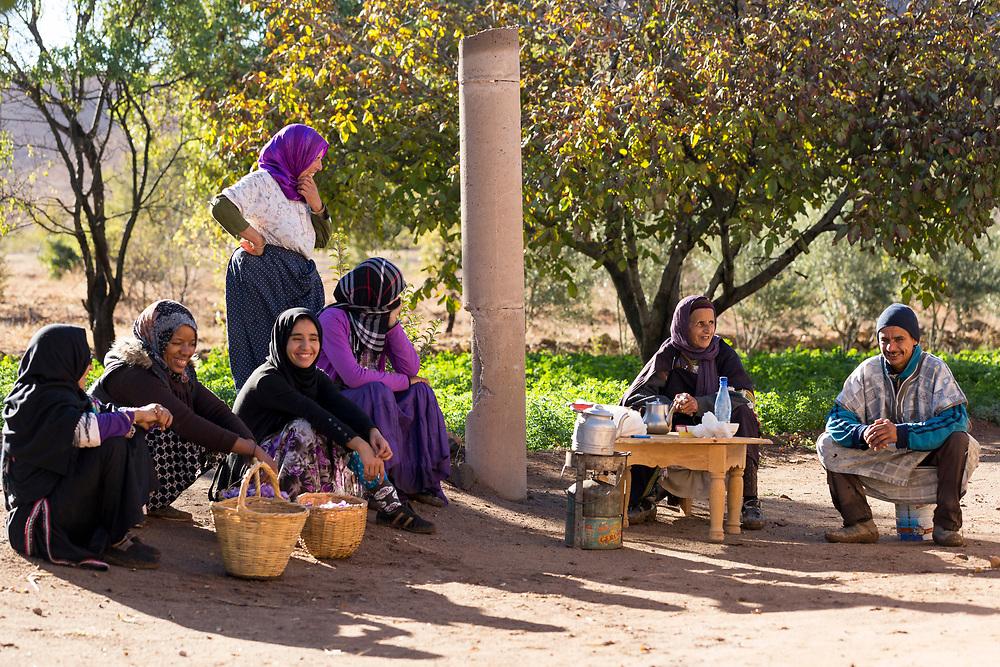 TALIOUINE, MOROCCO - October 25th 2015 - workers take a break and prepare saffron tea with freshly harvested stigmas at a saffron farm in Taliouine, Sirwa Mountain Range, Souss Massa Draa, Southern Morocco