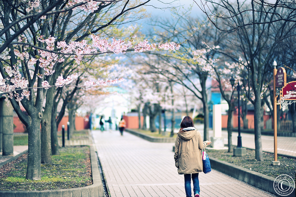 A japanese university in spring time.