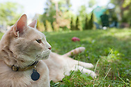 Orange Tabby cat lounging in the grass
