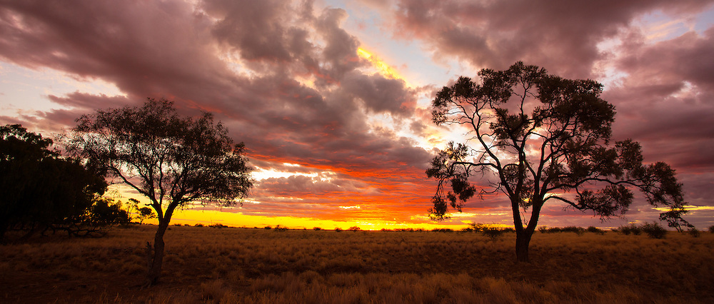 Silhouette of eucayptus trees at sunset in the Australian outback, near Longreach, Queensland