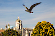 A seagull passes in front of Hieronymus Monastery (Mosteiro dos Jerónimos) in Belém, Lisbon. The monastery is one of the most prominent monuments of the Manueline-style architecture (Portuguese late-Gothic) in Lisbon, classified in 1983 as a UNESCO World Heritage Site.
