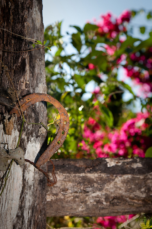 """Horse Shoe in Puerto Vallarta"" - This old rusty horse shoe was photographed in beautiful Puerto Vallarta, Mexico."