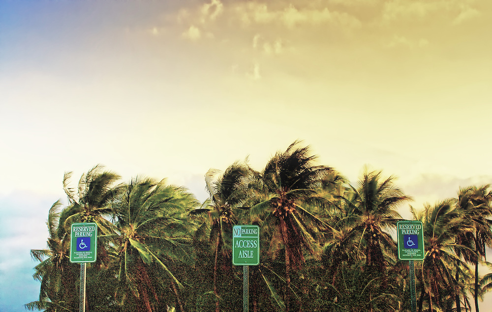 Palm trees stand next to a parking lot with reserved parking and wheelchair access signs in Waikoloa, Hawaii.