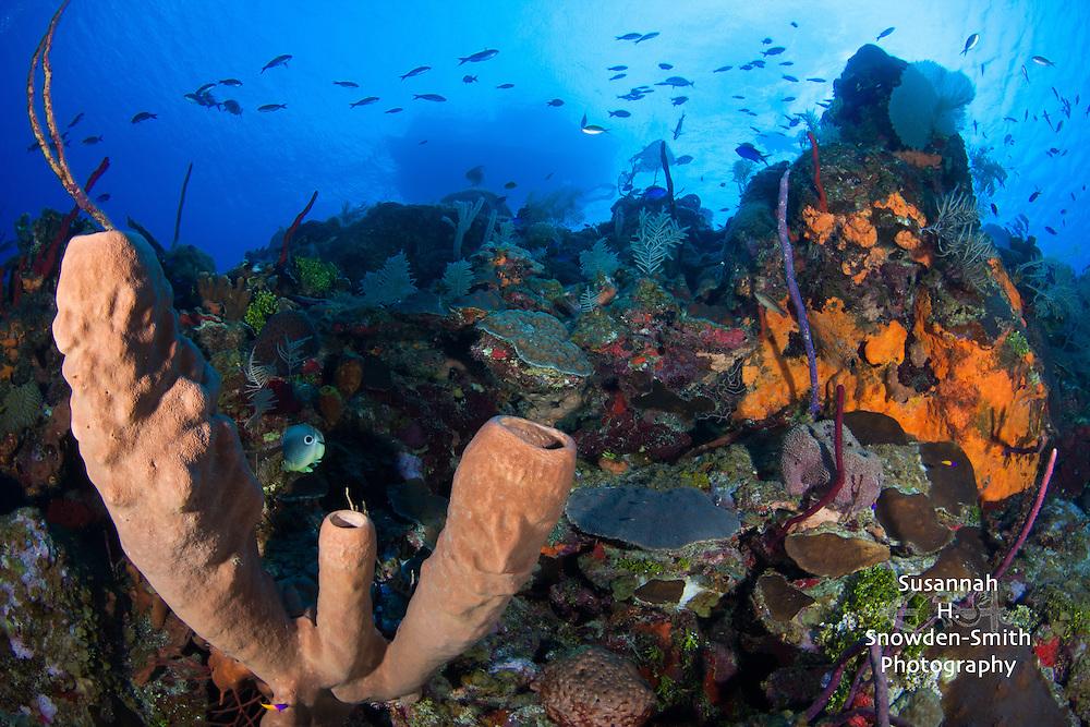 Babylon Reef - East Side, Grand Cayman