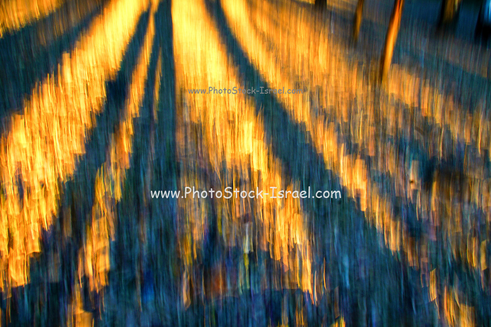 Abstract defocused colour light strips in a dark black night