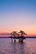 A still morning sunrise with colors of blue, orange, magenta at Reel Foot lake, near Tiptonville, TN. Reel Foot Lake