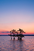 Reel Foot Lake Tennessee