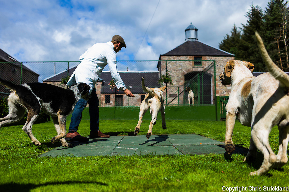 Abbotrule, Bonchester Bridge, Hawick, Scotland, UK. 19th July 2015. Huntsman Johnny Richardson works with hounds on the showing slabs. Hounds (l to r) Marco, Madam, Mackside.