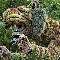 Big Cat Bush Sculpture at Busch Gardens in Tampa, Florida<br />