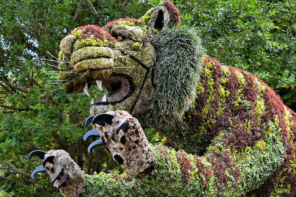 Big Cat Bush Sculpture at Busch Gardens in Tampa, Florida | Encircle ...