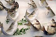 Griekenland, Athene, 5-7-2008Tsipoura, ook wel goudbrasem of koningsdorade genoemd op de markt van Athene. Het is een veel gegeten delicatesse van ong. 1 kilo . Wordt ook gekweekt in de golf van Korinthe.Foto: Flip Franssen
