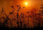 Bush fire in Kaziranga, north-eastern India.