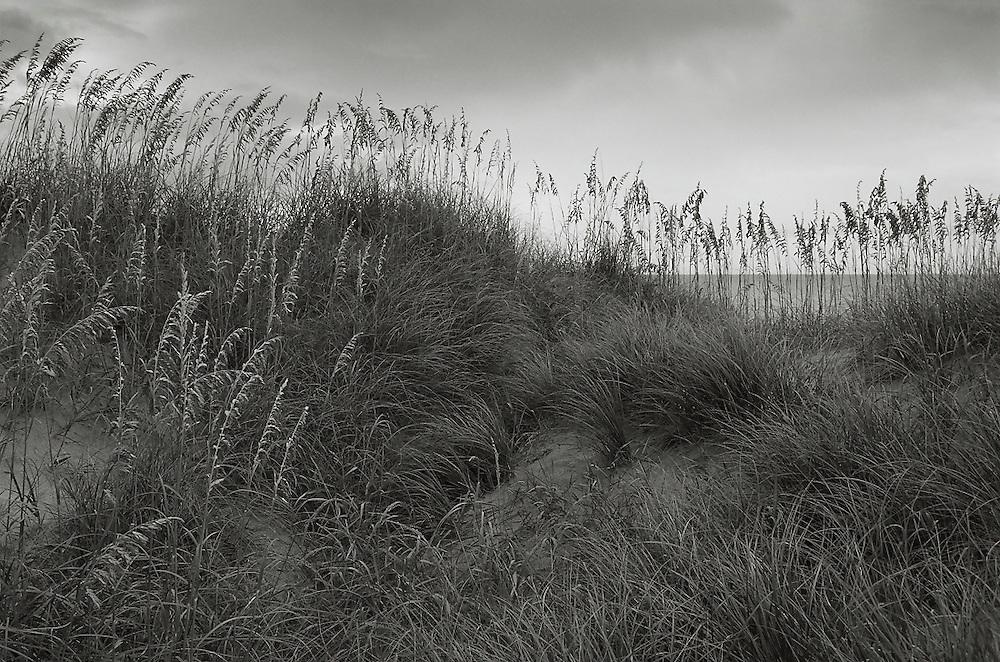 SUMMER BEACH DUNES