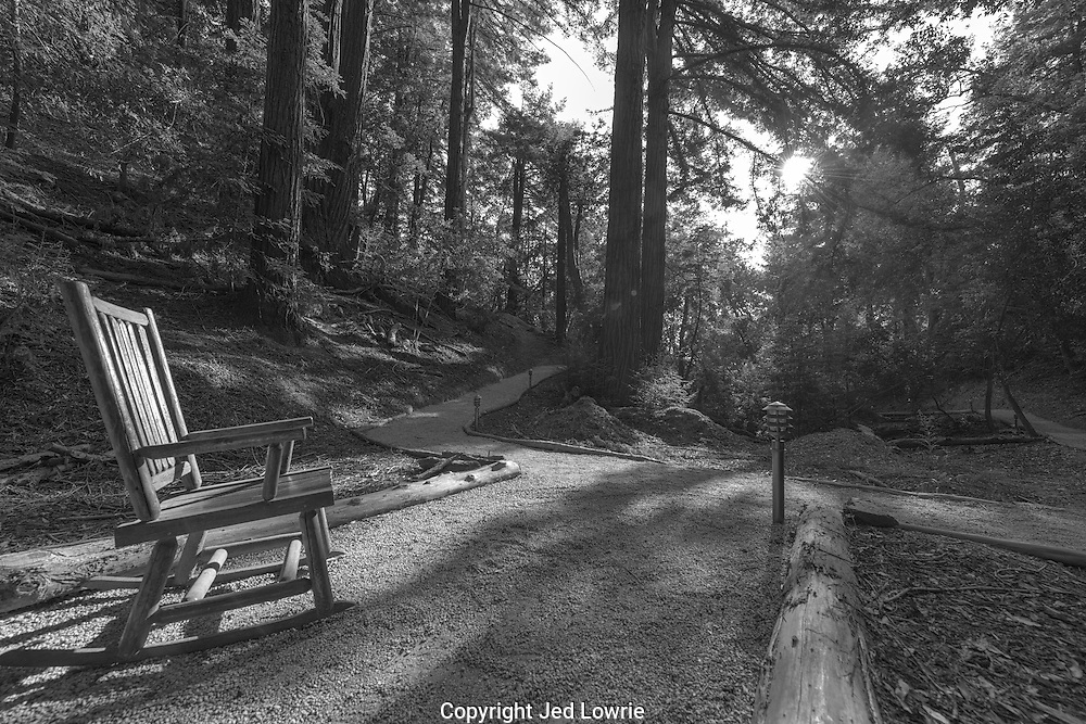 Imagine enjoying the sunset amongst the Redwoods in a relaxing rocking chair.  This image takes you there. Tranquility.
