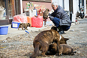 Naoto Matsumura plays with a puppy that he numbers among the pets and other animals he looks after that were left behind in the government-imposed no-go zone about 10 km from the Fukushima Daiichi Nuclear Power Plant in Tomioka, Fukushima  Prefecture, Japan on 01 Mar. 2012. . .Photographer: Robert Gilhooly