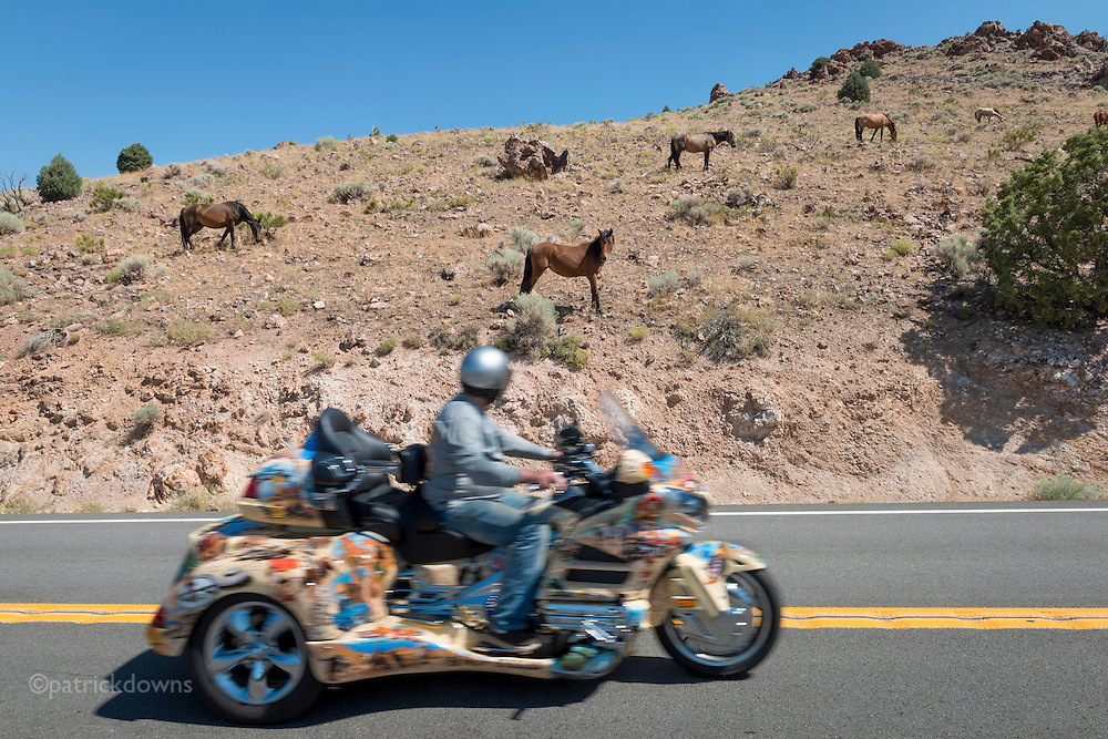 "A ""modern cowboy"" on a fancy trike passes a bunch of wild mustangs grazing along the mountainside on Highway 341, on the way from Reno to Virginia City, Nevada."