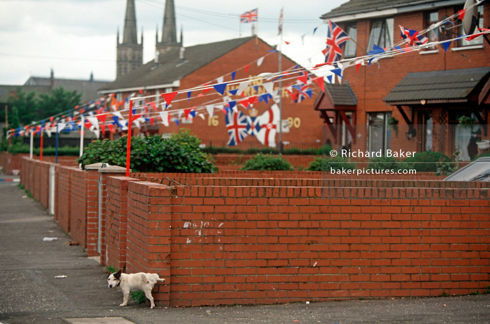 With Loyalist flags and bunting hanging from nearby homes, a dog pees against a property wall in the Protestant estate off the Shankill Road, on 7th June 1995, in Belfast, Northern Ireland UK. (Photo by Richard Baker / In Pictures via Getty Images)