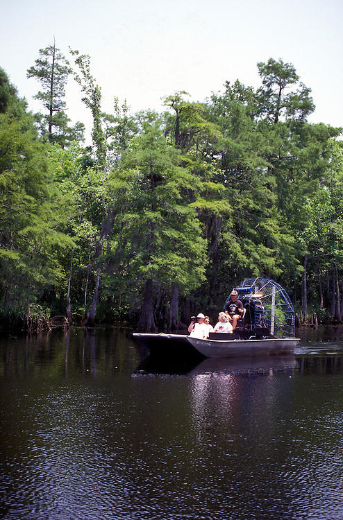 Orange, Texas:  Airboat rides show off the quiet beauties of Blue Elbow Swamp, an offshoot of Little Cypress Bayou.
