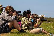 Photographers, Featherfest, Galveston, Texas.