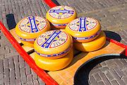 Display of wheels of Beemster aged gourmet Gouda cheese at Alkmaar cheese market, The Netherlands