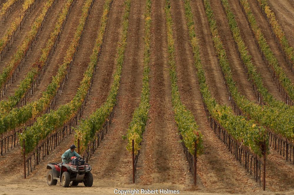 Goldeneye Winery, Anderson Valley, Mendocino County, California