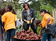 Oct 20, 2010 - Washington, District of Columbia, U.S. - First Lady MICHELLE OBAMA and students from local Washington, D.C. schools participate in the White House Kitchen Garden Fall Harvest. As part of her Let's Move! campaign to reduce childhood obesity, Mrs. Obama spoke about the importance of eating fruits and vegetables, shared withthe students lessons about where their food comes from and how that impacts their health. (Credit Image: © Pete Marovich/ZUMA Press)
