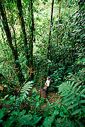 ECUADOR, HIGHLANDS Bosque Mindo-Nambillo cloud forest