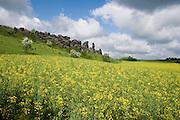 Felsformation Teufelsmauer bei Weddersleben (ältestes Naturschutzgebiet Deutschlands), blühendes Rapsfeld, Harz, Sachsen-Anhalt, Deutschland | rocks of Teufelsmauer (Devil's Wall) near Weddersleben, Harz, Saxony-Anhalt, Germany