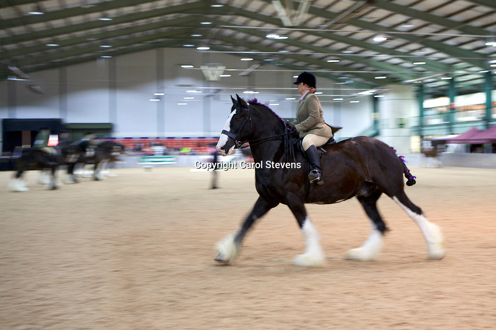 Shire Horse Society Spring Show 2017  Classes 1&2 Ridden