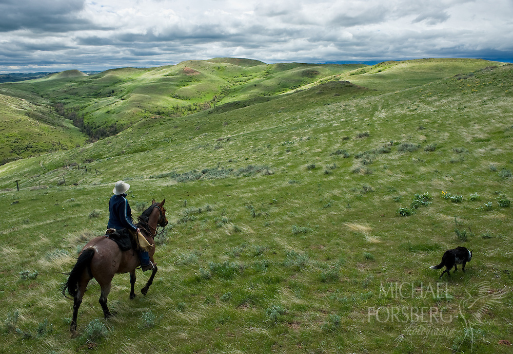 Rancher and community organizer Jill Morrison surveys a sweeping range of green hills on the family land with her dog. Sheridan County, Wyoming.
