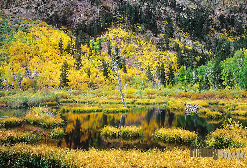 Fall color in Lundy Canyon, near Lee Vining, California in the Eastern Sierras