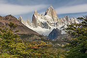 The Patagonian Lenga forest surrounding Mount Fitzroy.
