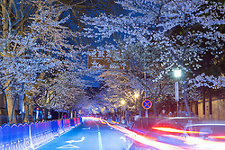March 24, 2019 - Nanjing, Nanjing, China - Nanjing,CHINA-Night scenery of cherry blossoms at Jiming Temple in Nanjing, east China's Jiangsu Province. (Credit Image: © SIPA Asia via ZUMA Wire)