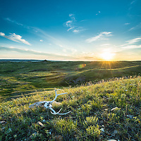sun sets on montana prairie green grass, flowers, deer skull