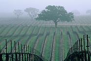 Paso Robles & San Luis Obispo Wine Country