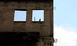 Lod - May 3rd,  2008- A pigeon sits in a window of an abandoned house in the village of Lod  just outside Tel Aviv, Israel, May 3rd, 2008. Picture by Andrew Parsons / i-Images