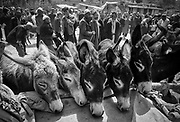 Mules and donkeys for sale, Kashgar Sunday market, far western China, Central Asia.