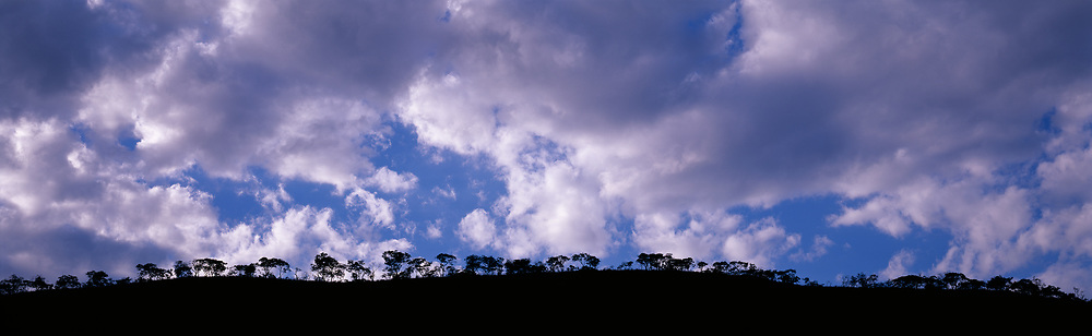 Tree line on hillside and big sky with clouds