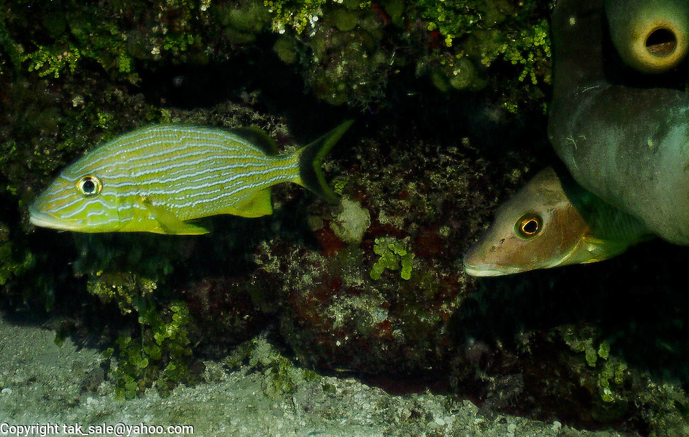 Shy but curious fish