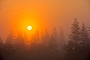 Trees and fog at sunrise <br />Near Havre-Saint-Pierre<br />Quebec<br />Canada